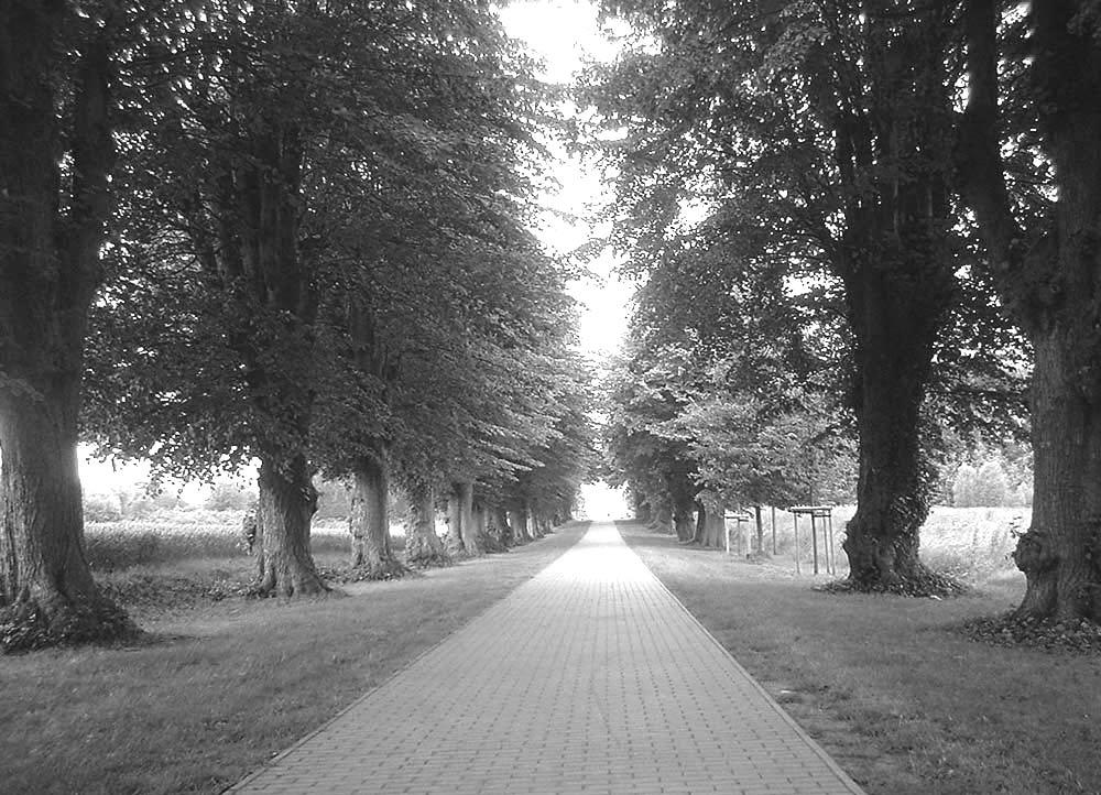 ~ Am Ostseeradweg ~