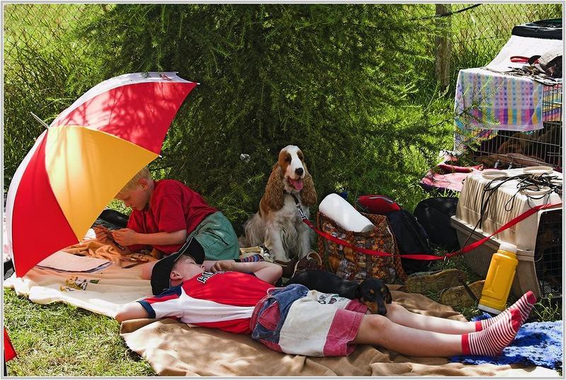 Am Rande der Hundeausstellung
