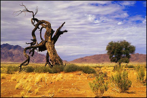 Am Rande der Namib