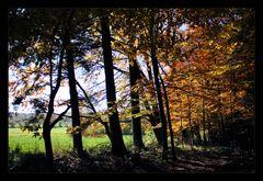 am Rande des Waldes