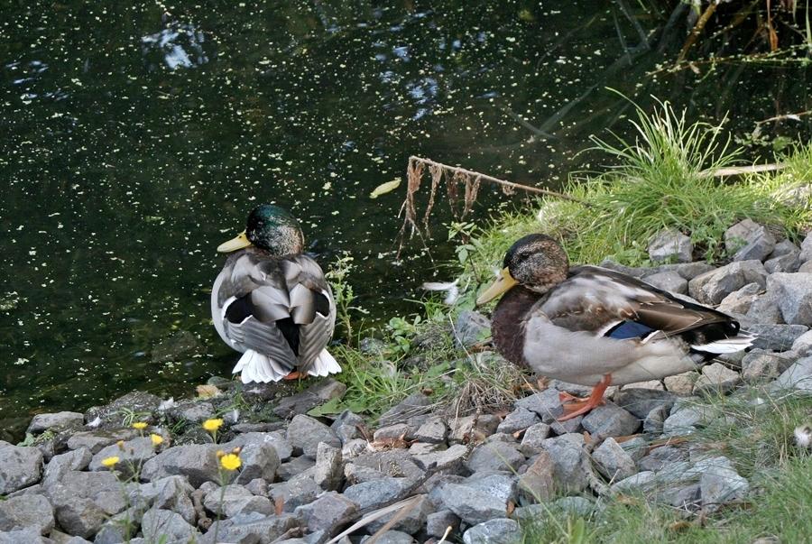 Am Regenauffangbecken - [2013-09-29]