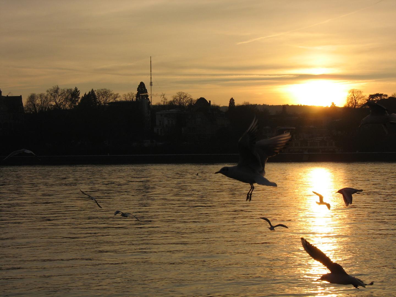 am Rhein 2011
