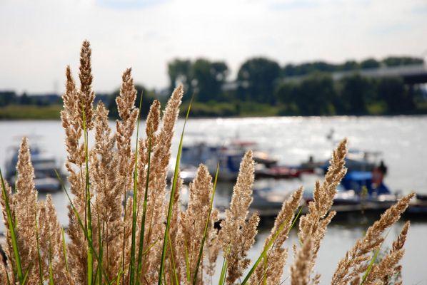 Am Rhein....