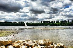 Am Rhein zwischen Walluf und Eltville