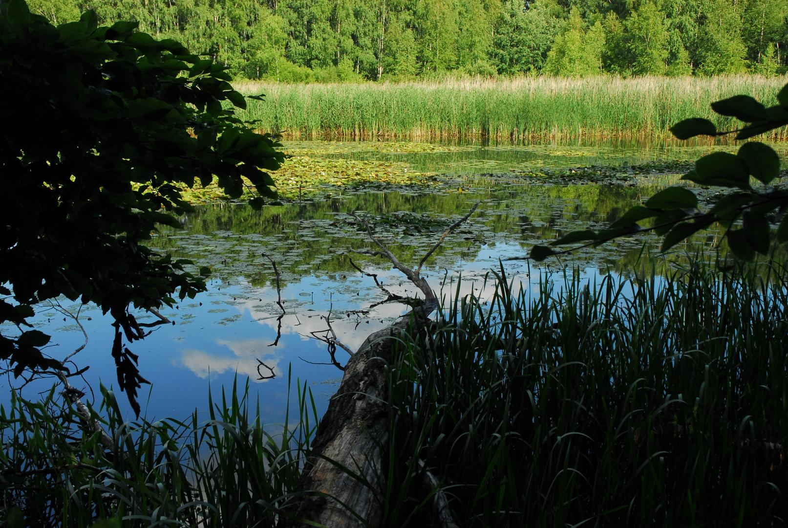 Am See Lezczok in Polen