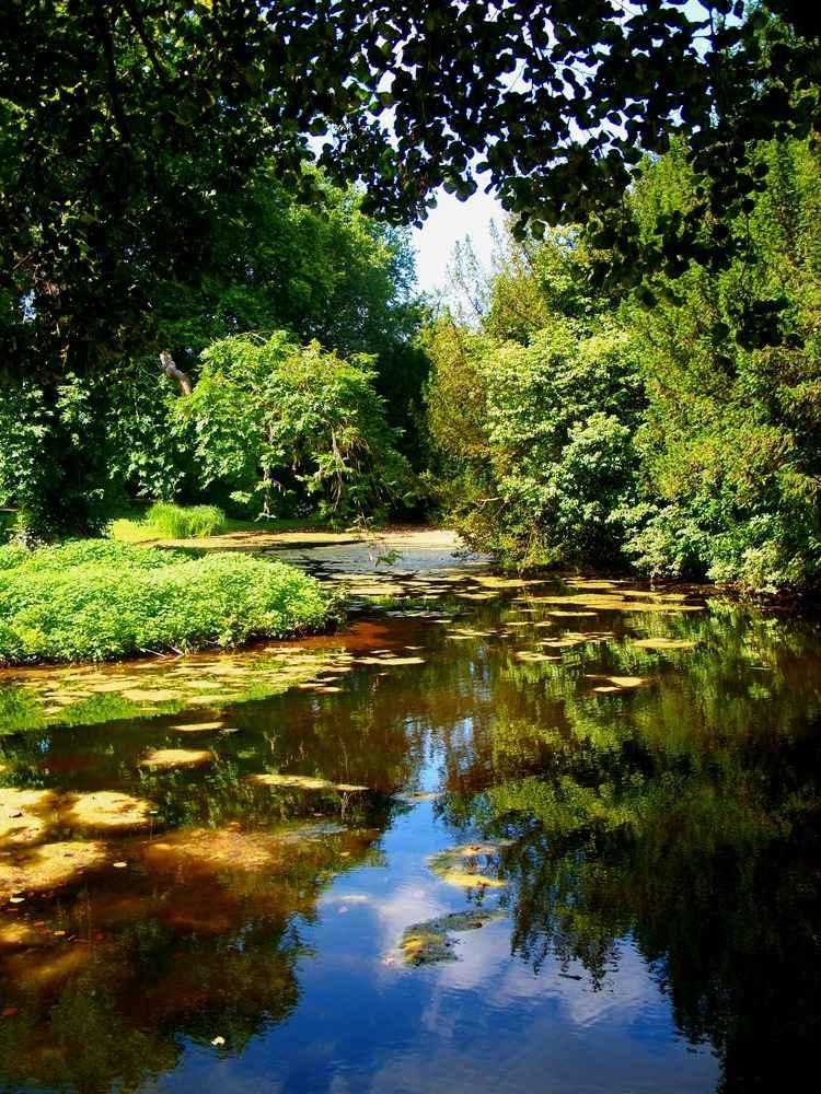 Am sommerlichen Teich