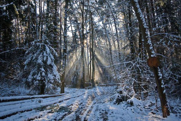 Am Sonntag im Wald.......