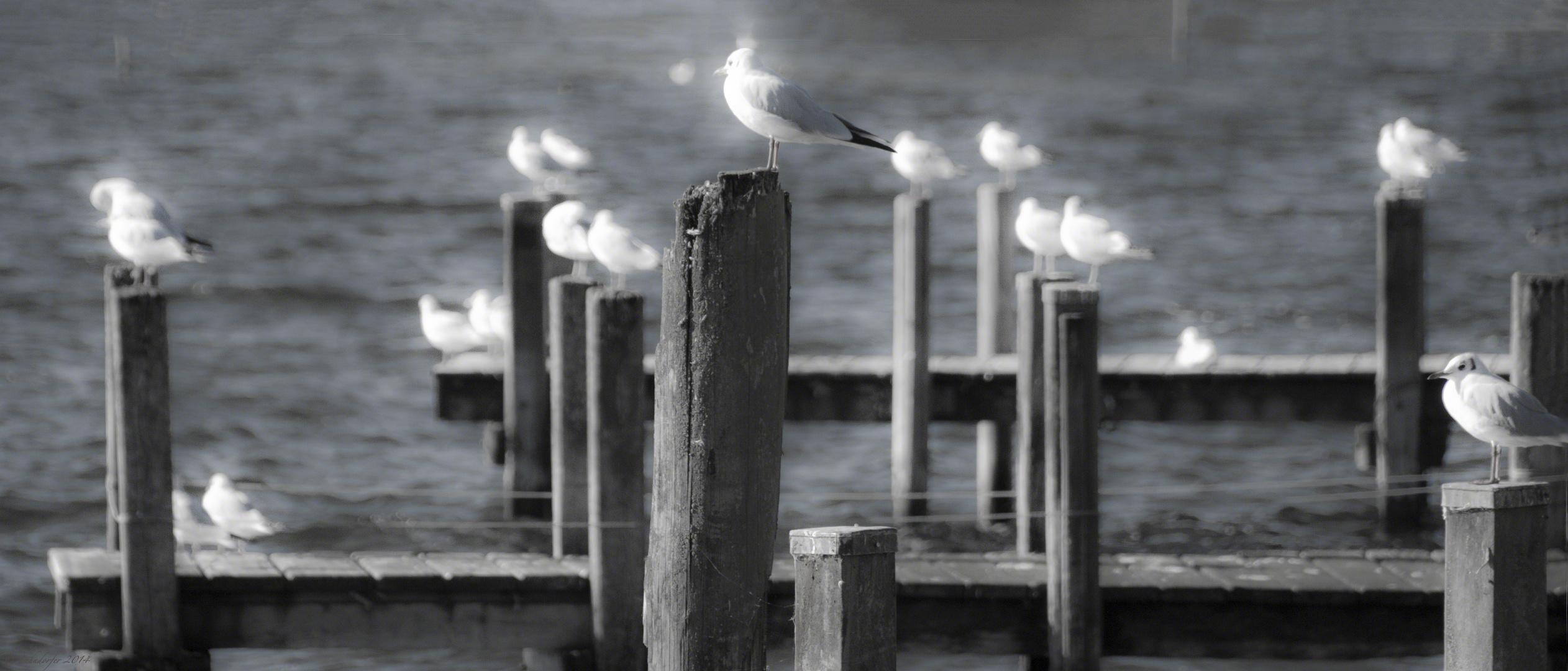 ... am Starnberger See