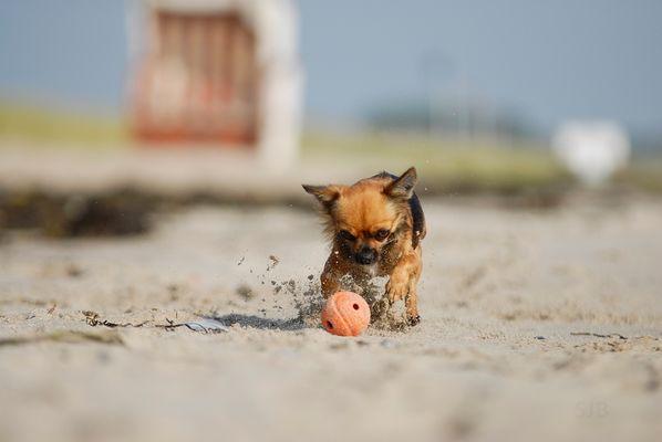 Am Strand Ball spielen...