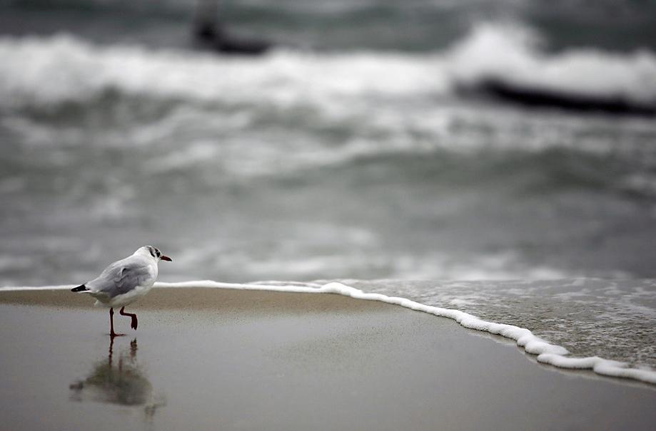am strand... II