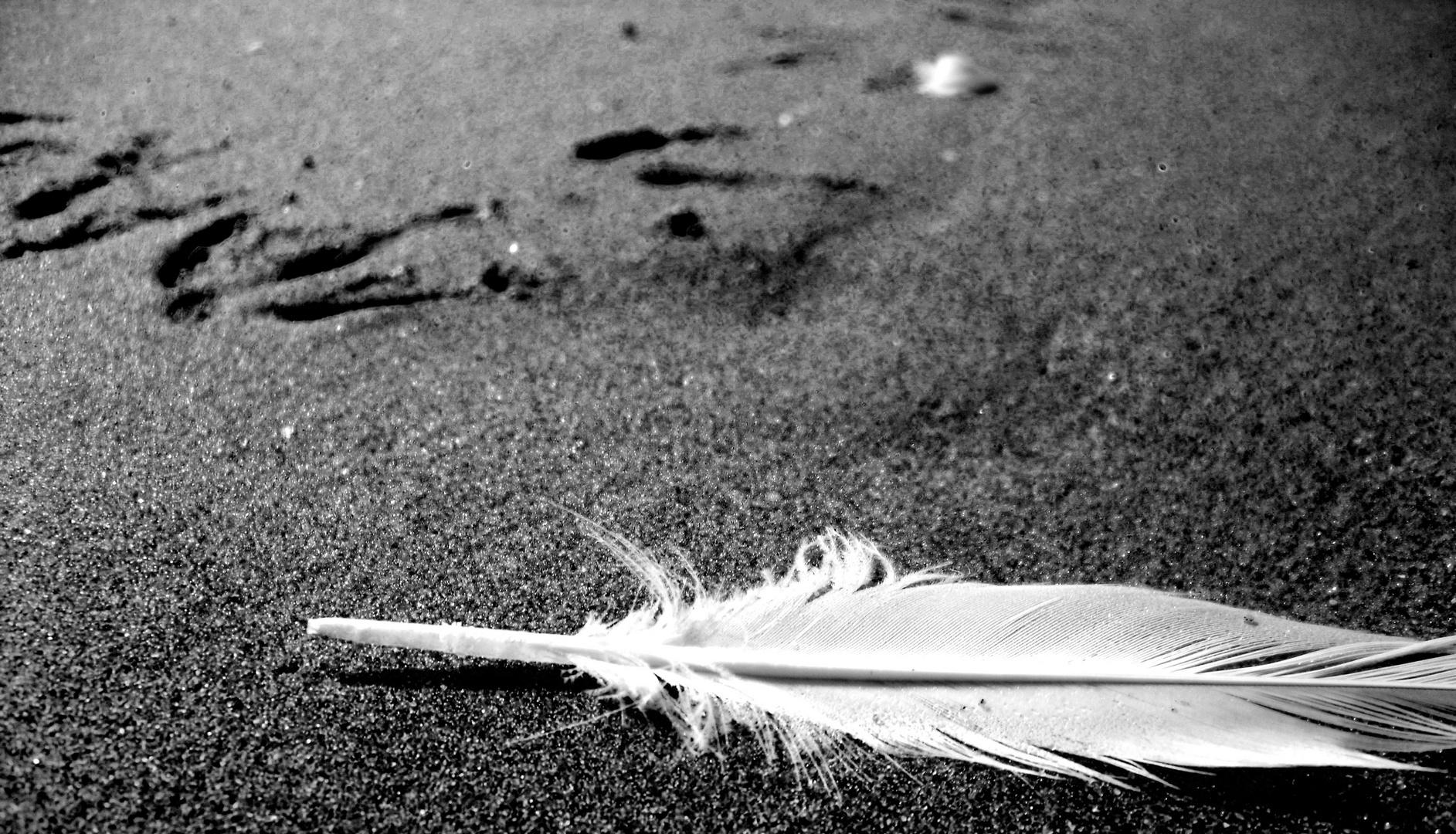Am Strand von Callantsoog - Reloaded