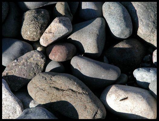 am Strand von Campell River / BC
