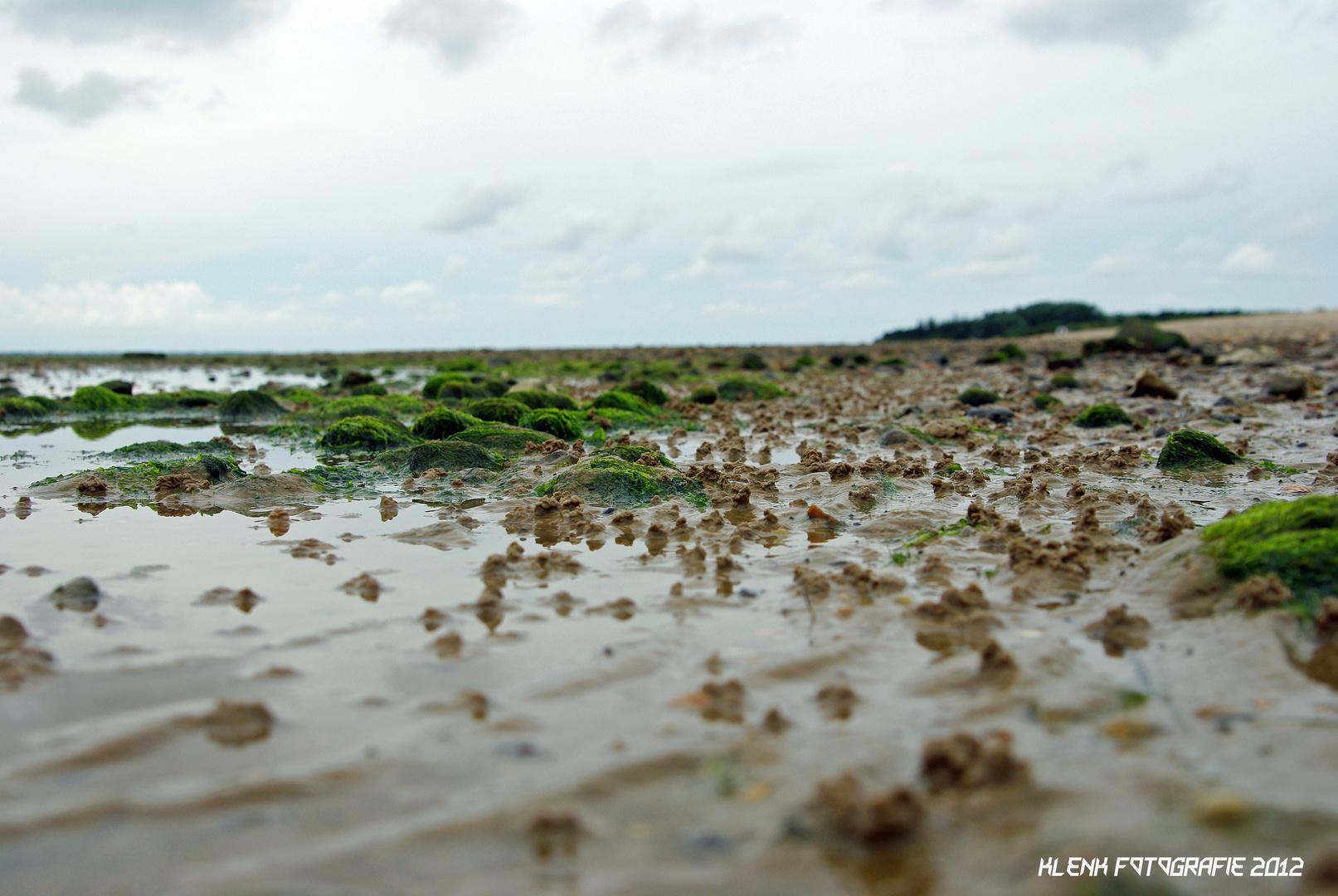 Am Strand von Hedehusum auf Föhr 2012