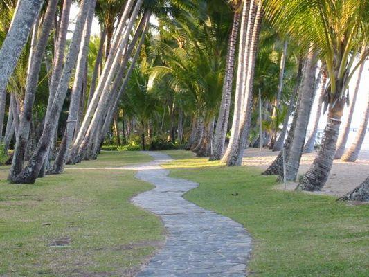 Am Strand von Palm Cove