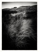 ... am Strande weht das Gras.