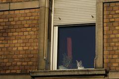 am tag ist durchaus die eine oder andere katze grau. ein stückweit.