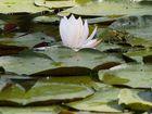 Am Teich 3 - Frosch betrachtet Blume