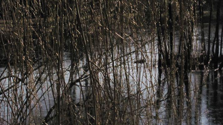 Am Teich bei einem Spaziergang2