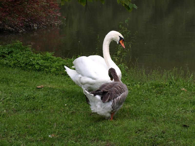 Am Teich im Schloßpark Lerbach