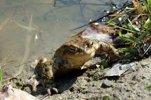 Am Teich in Würnitz war sie eine von viiiielen