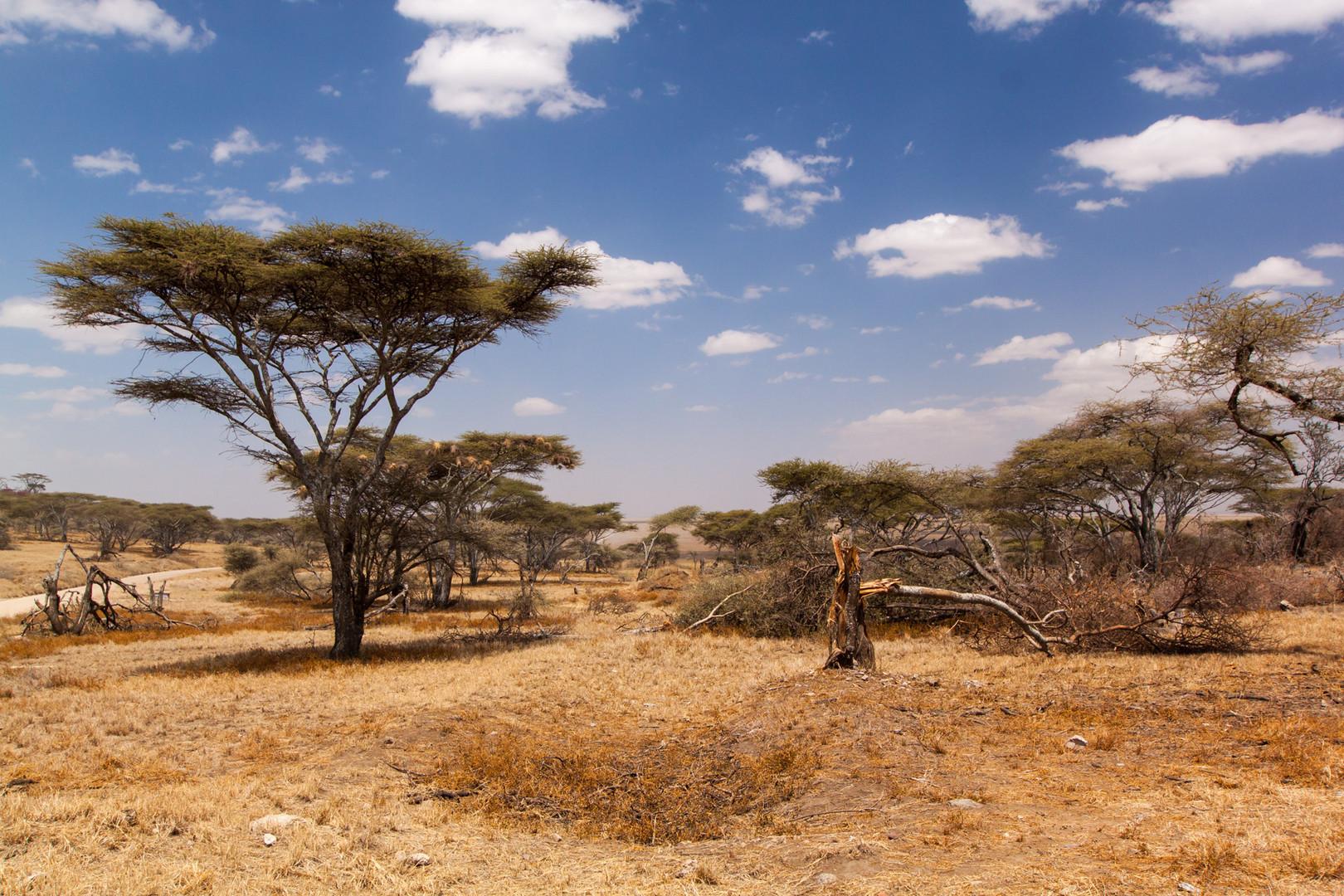 Am Tor zur Serengeti
