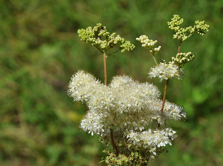 am Ufer des Ödensee fand ich diese schöne Pflanzeam am Ufer...