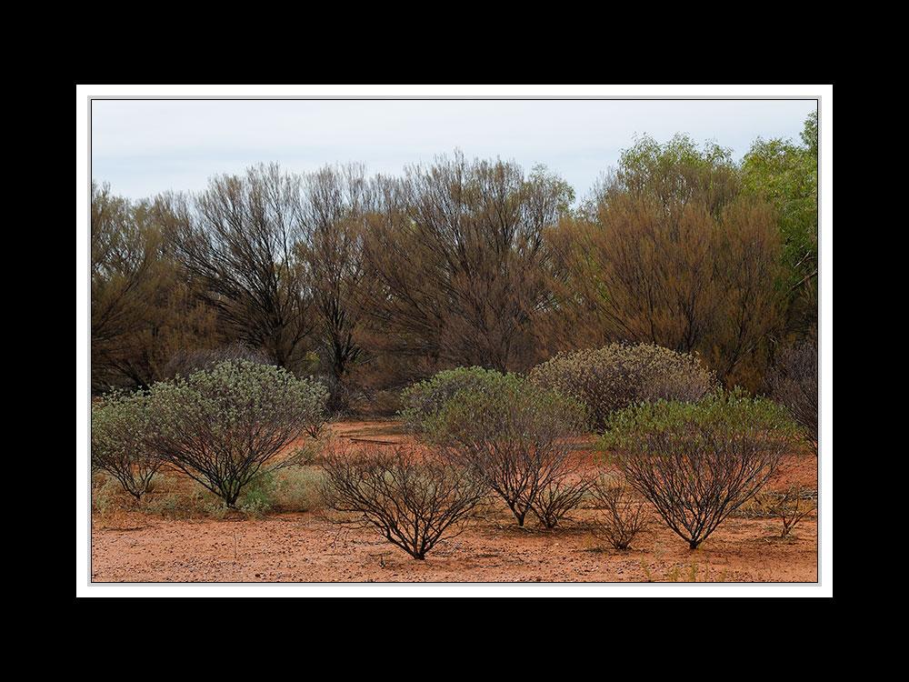 Am Uluru 16