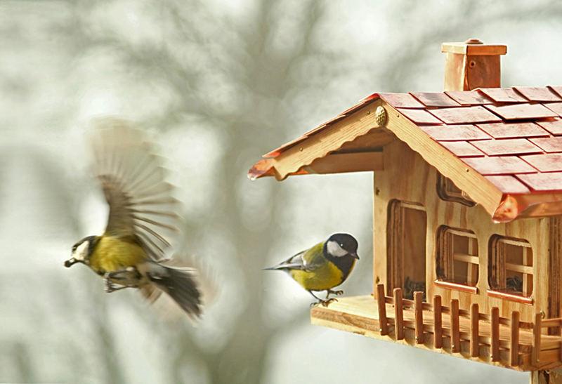 am Vogelhaus [2]