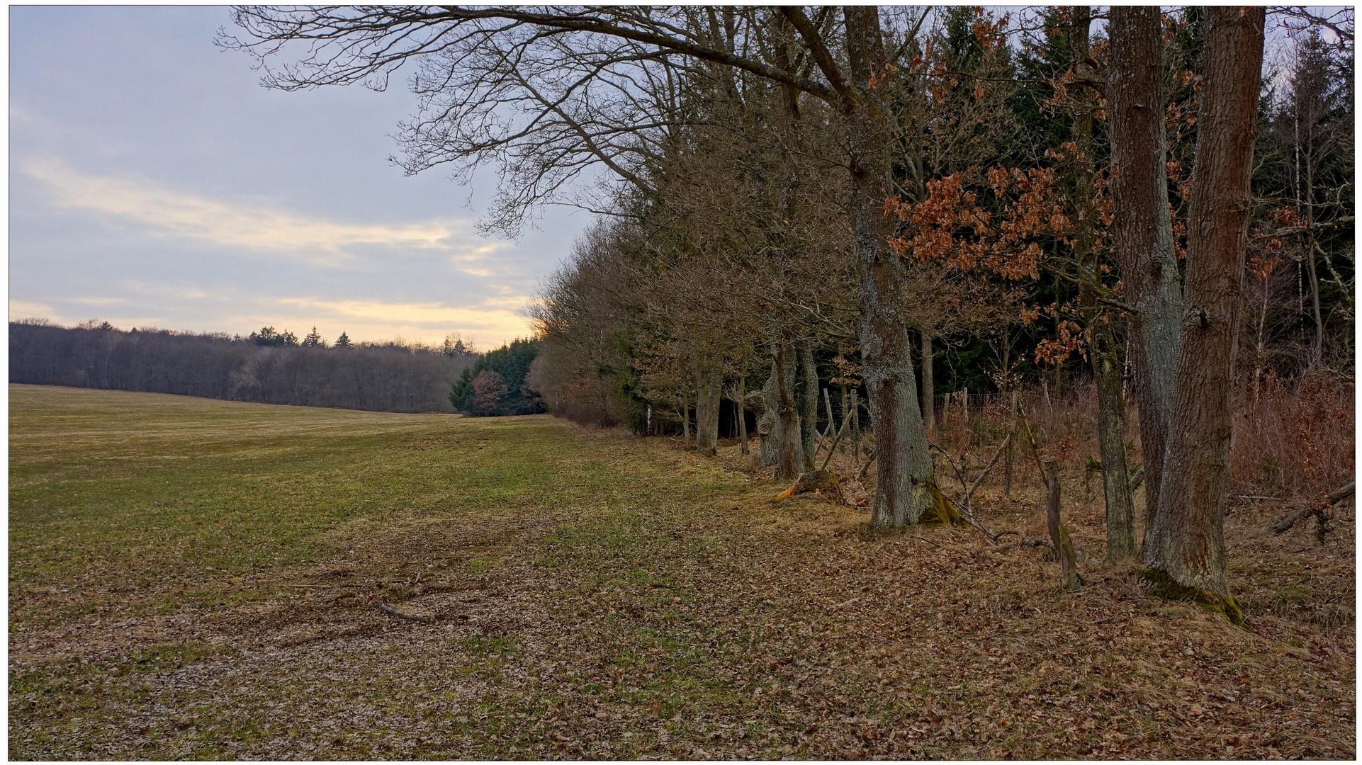 Am Waldrand (en el borde del bosque)