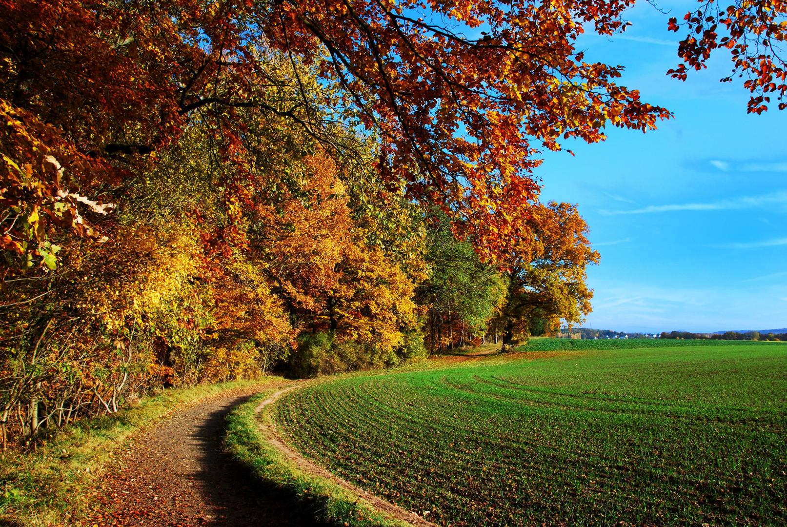 Am Waldrand entlang...