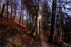 am Waldweg zur Pletzachalm