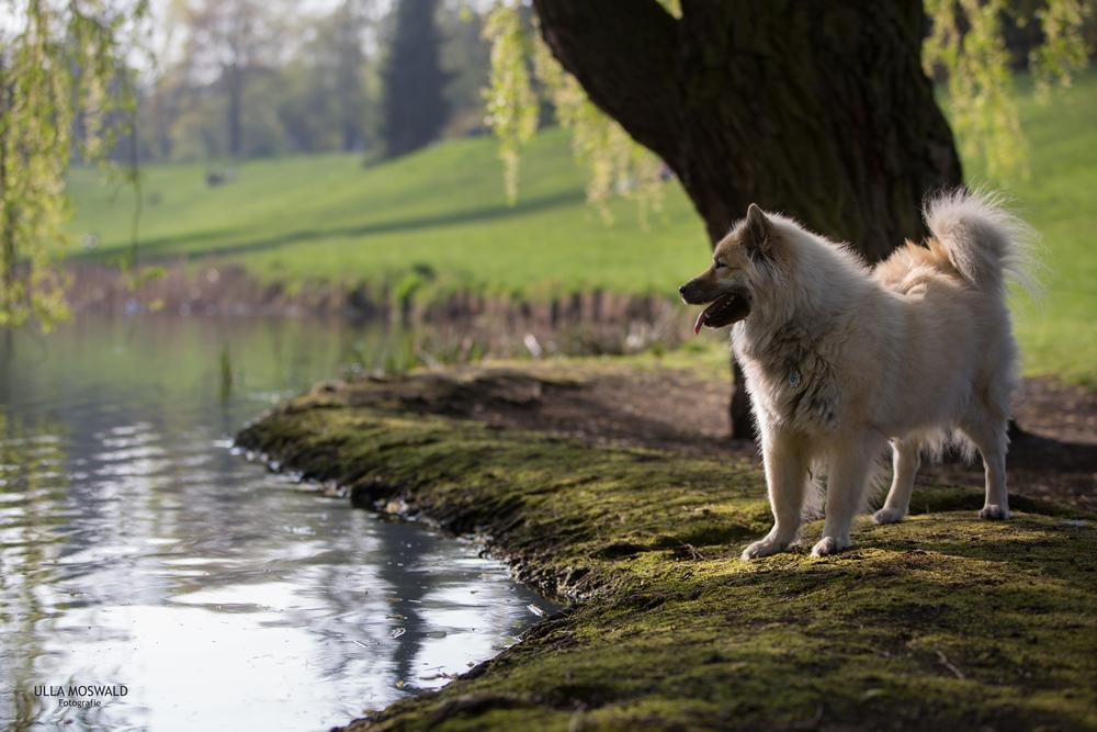 ...am Wasser...