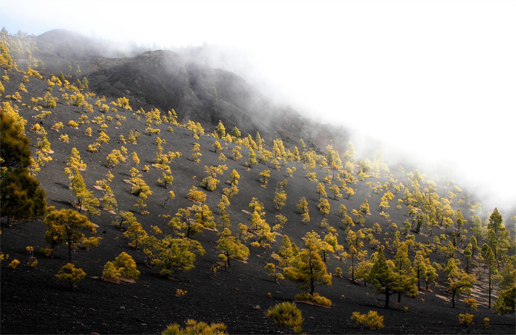 am Weg zum Vulkan St. Martin und immer wieder zieht etwas Nebel auf