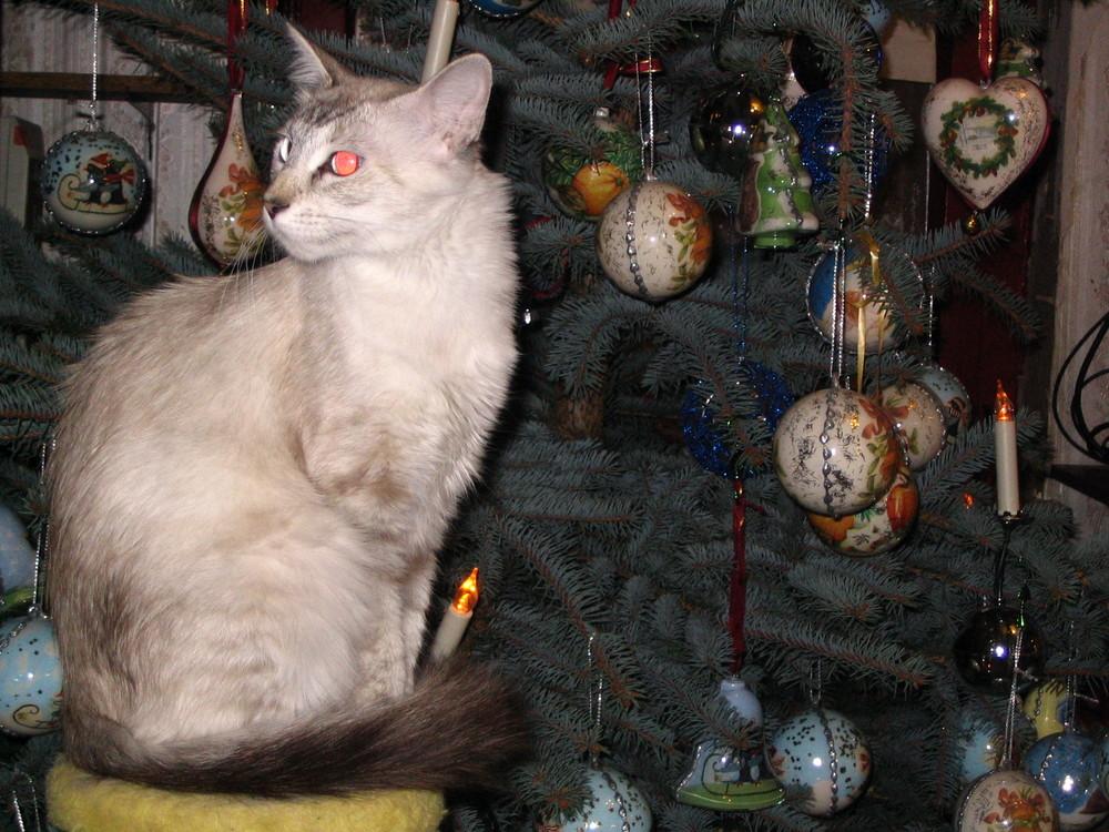 Am Weihnachtsbaume......