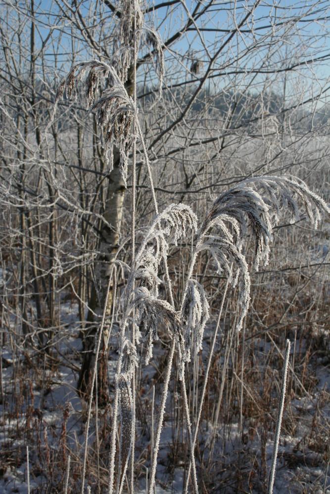 am Wintermorgen bei Eiseskälte