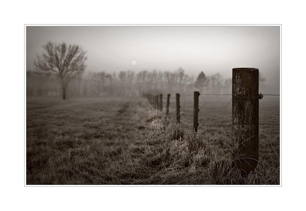 am Zaun entlang..