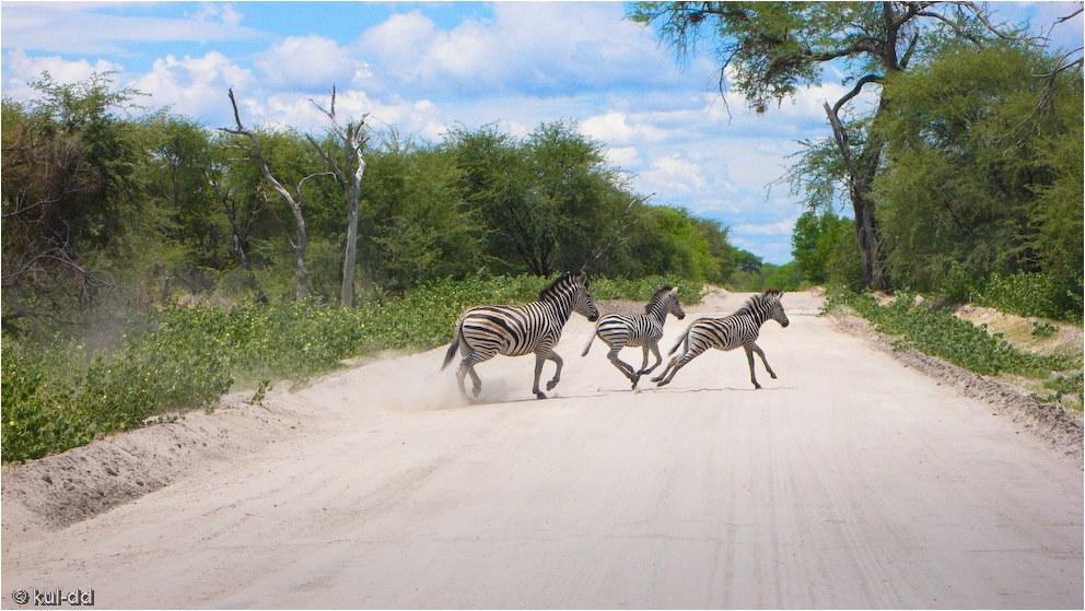 am Zebrastreifenübergang