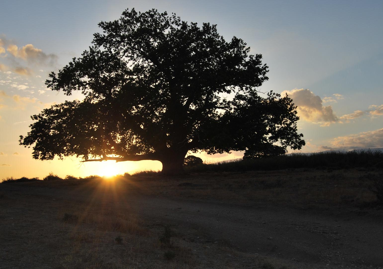amanecer en los castaños