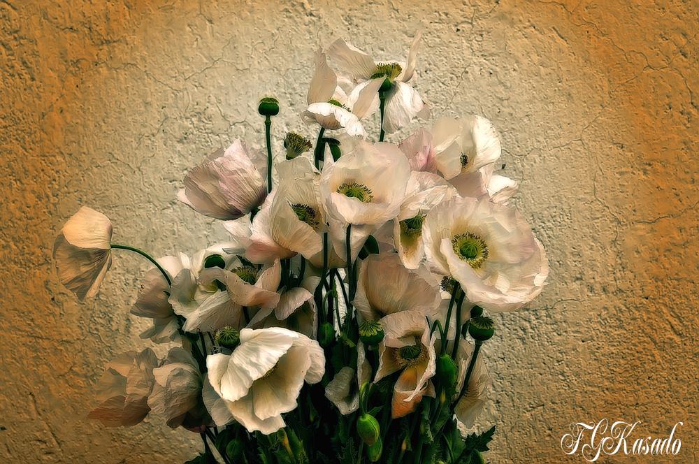 Amapolas Blancas ( A Iolanda Rodriguez)