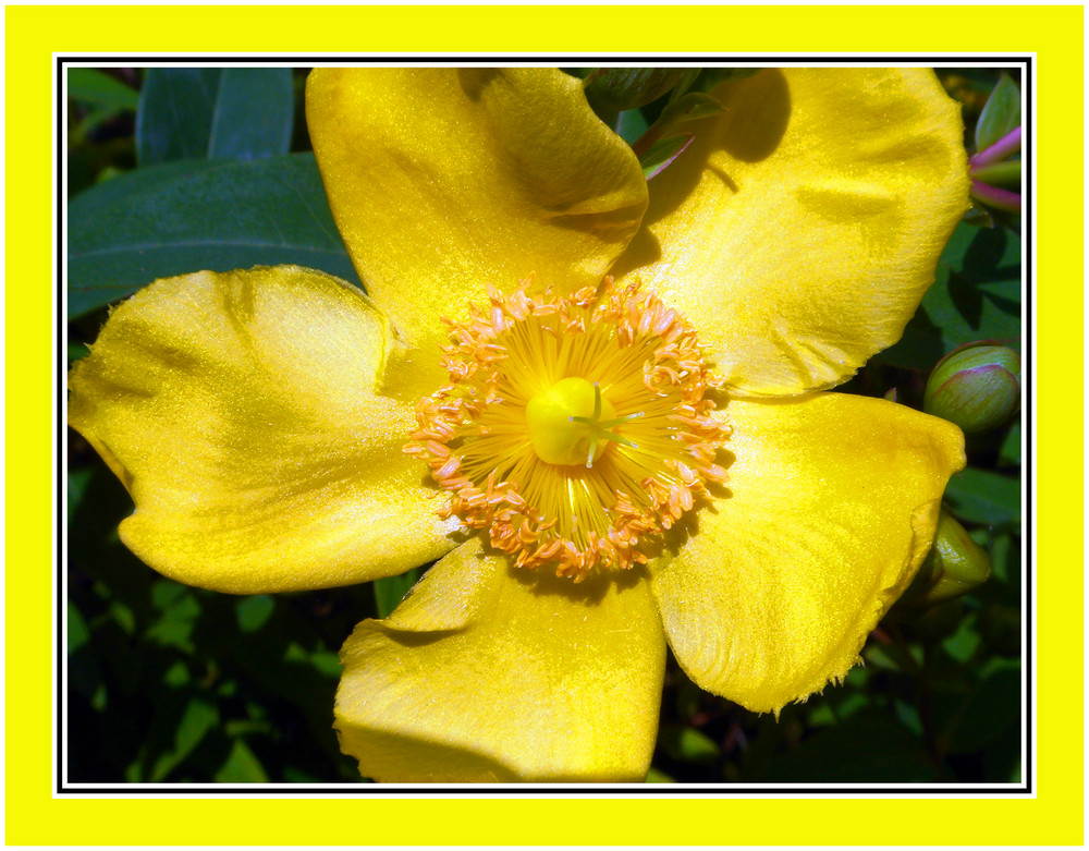 Amarillo 3