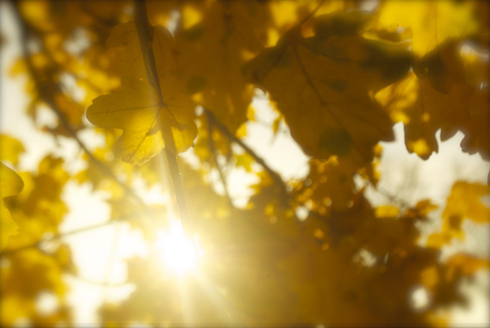 Amarillo entre hojas