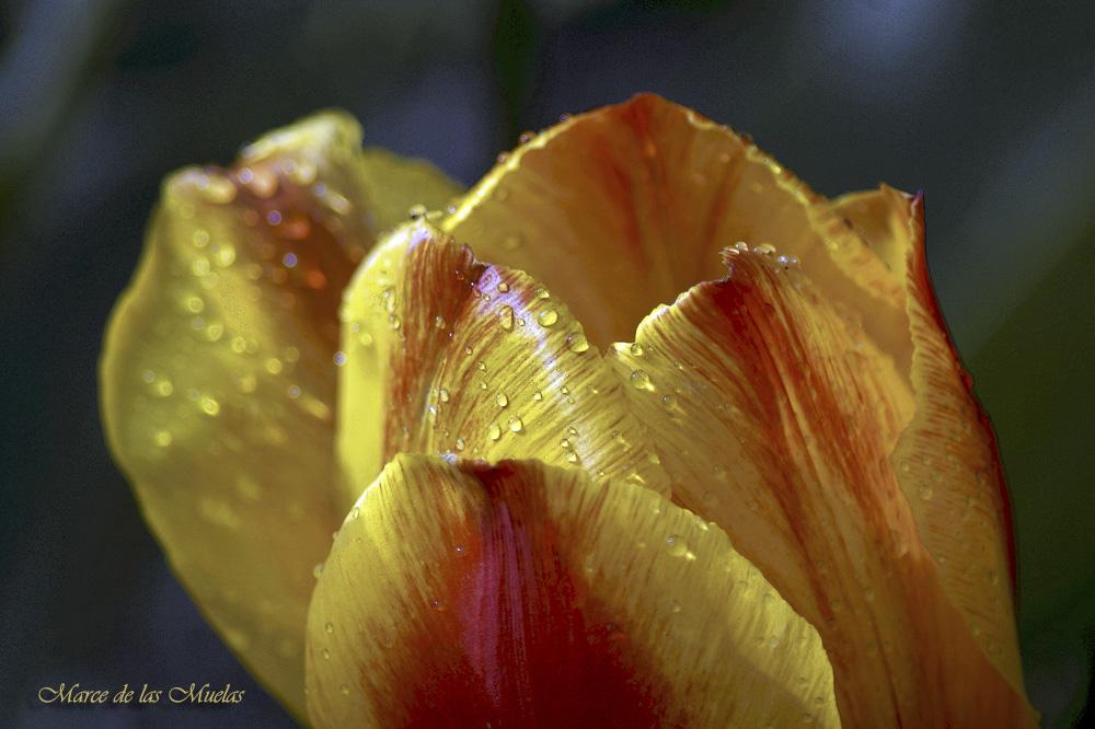 ...amarillo y naranja...