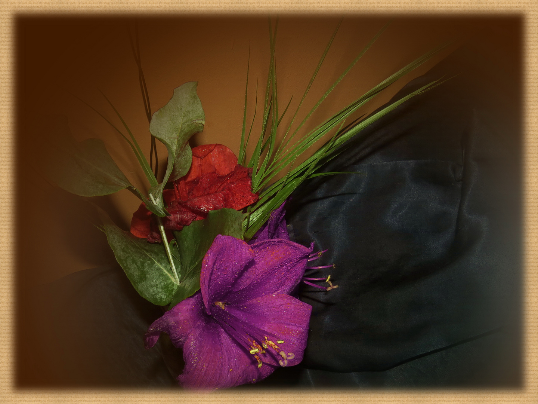 Amaryllis (2) solche Farbtöne zb. mag ich