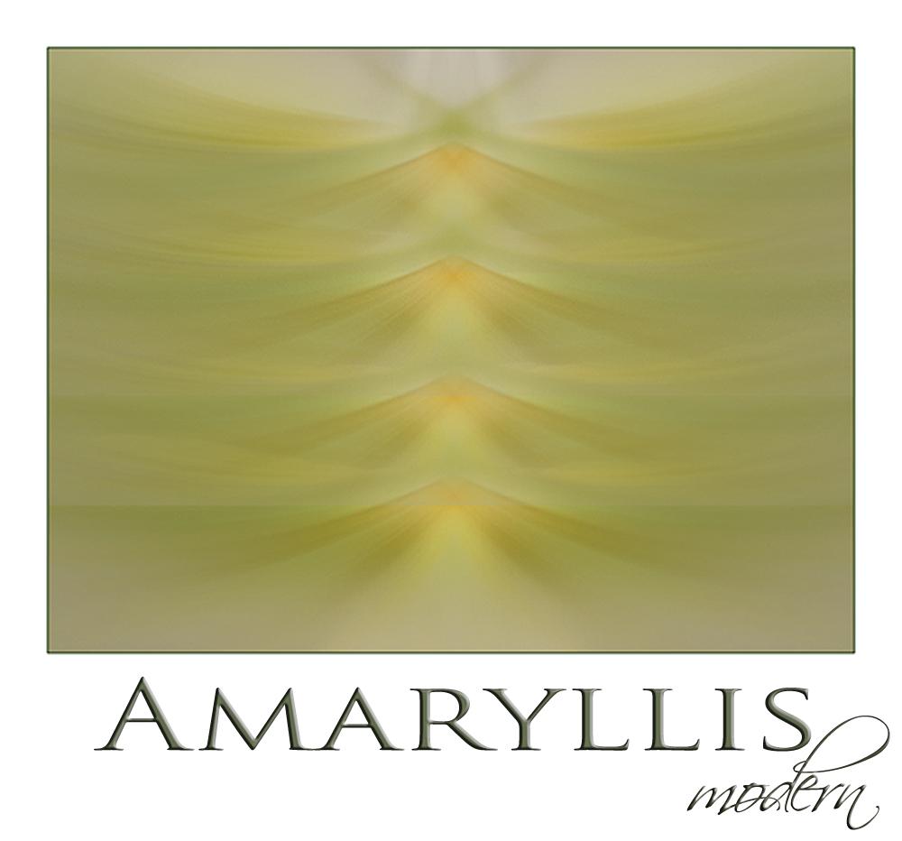 Amaryllis modern