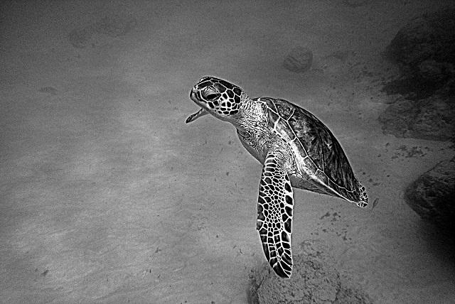 amazing turtle