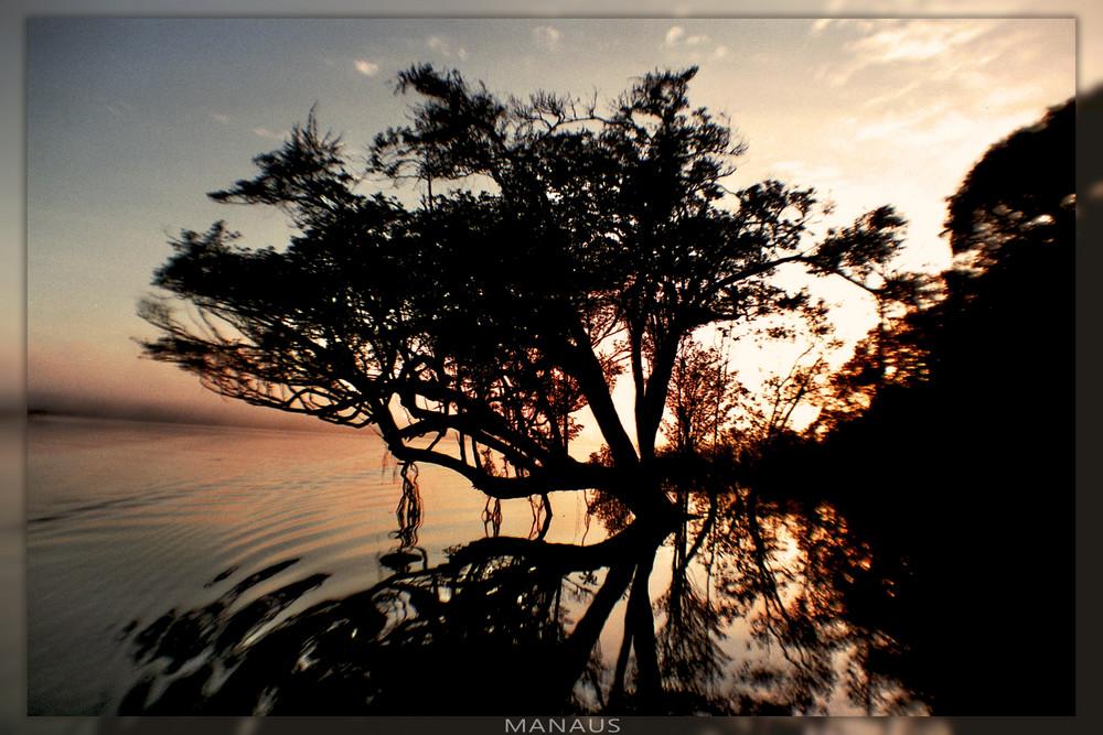 Amazonas sunrise