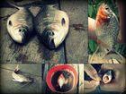 Amazonasfische