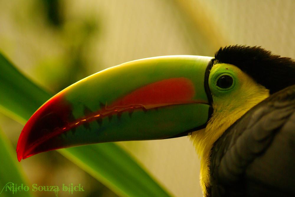 Amazonia Selvagem - Brasil