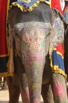 Amber bunter Elefant
