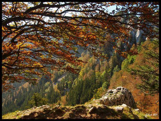 Ambiance d'automne dans le Jura Neuchâtelois.